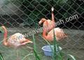zoo bird netting 1
