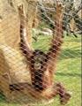 zoo rope mesh