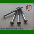 flat head - type polished wood screw