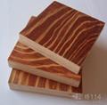石家庄建筑模板生产 3