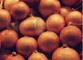 Egyptian golden onion by fruit link 2