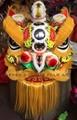 Malaysian lions 12