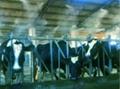 養殖場降溫設備