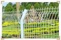 双边丝护栏网 4