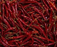 Indian Red  Chilli, Dry
