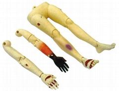 高級創傷四肢模型