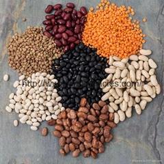 Beans, Mung Beans, Lentils