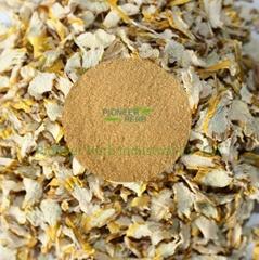 Dendrobium extract,Dendrobium nobile extract powder