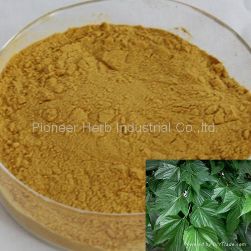 water soluble Mulberry Leaf extract 1-DNJ 1