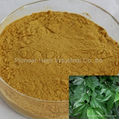 water soluble Mulberry Leaf extract