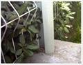 綠化護欄網