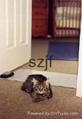 宠物训练毯训练垫 3