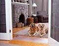 宠物训练毯训练垫 2