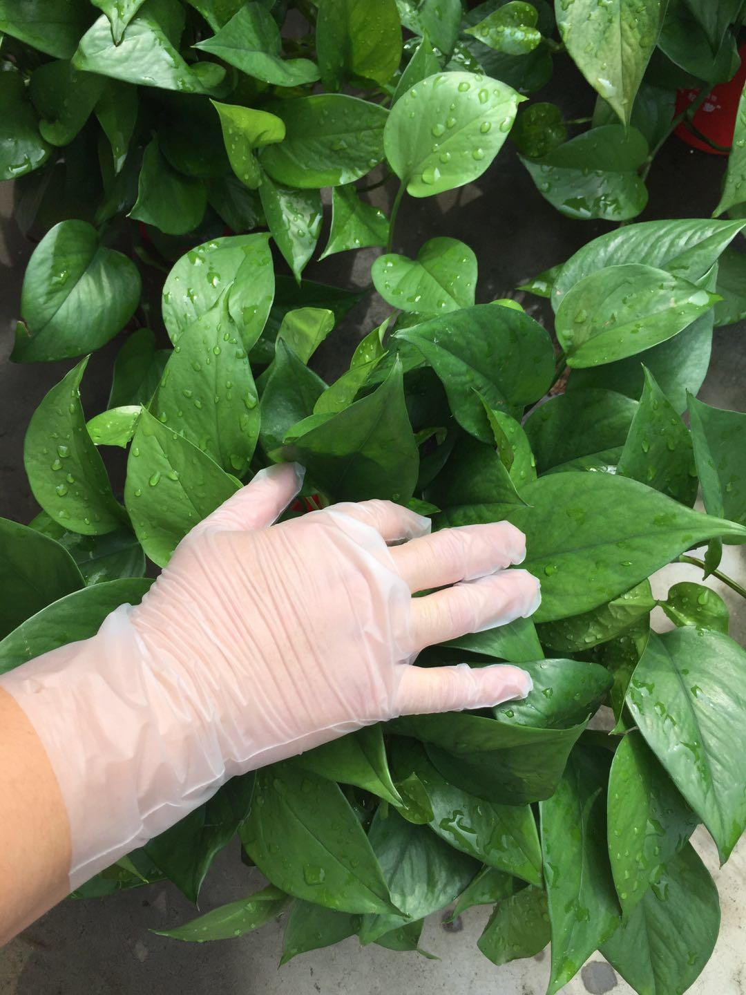 Disposable CPE gloves for food preparing 1