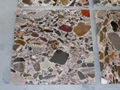 Brown Marble Conglomerate
