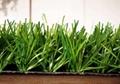 幼儿园人造草坪 5
