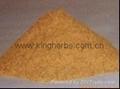 China Bacopa monnieri extract