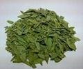 Senna Leaf Extract Sennosides 4% by HPLC