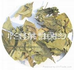 sweet tea leaves