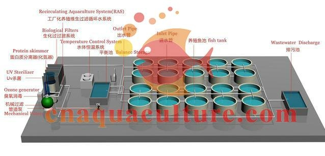 Recirculating Aquaculture System For Industrial Fish