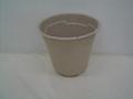 flower pot ---1 gallon annual