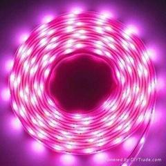 SMD(3528) LED LIGHT STRIP