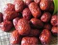 新疆若羌红枣 1