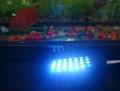 JY-28  迷你鱼缸小夹灯  草缸 观赏鱼专用照明 3