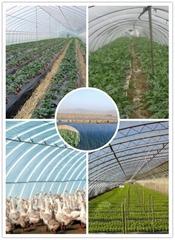 EVA greenhouse film