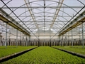 PE Film For Greenhouse 3