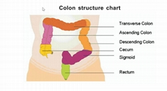 Portable Colon Hydrotherapy System, Home