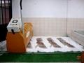 Carpet Washing Machine 3