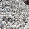 20-30mm white pebble stone