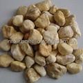 soybean yellow pebble stone