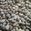 white polished pebble stone