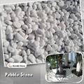 10-20mm white pebble stone (Hot Product - 1*)