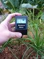 Garden Soil Moisture Meter 3