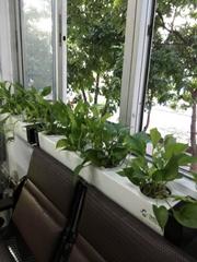 水培种植花筒