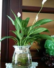 时尚水培花瓶