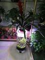 中號水草生態花瓶 5