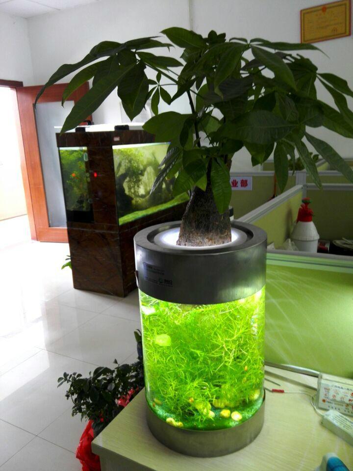 中號水草生態花瓶 4