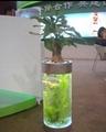 中號水草生態花瓶 2