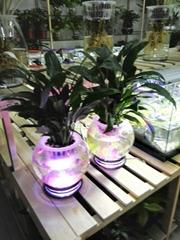 小號水草生態花瓶