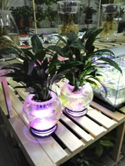 Aquatic ecological vase