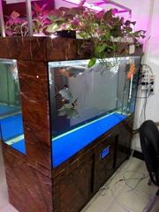 Ecological aquarium