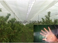 waterproof clear pe taraulin tarp for cherry covering 2