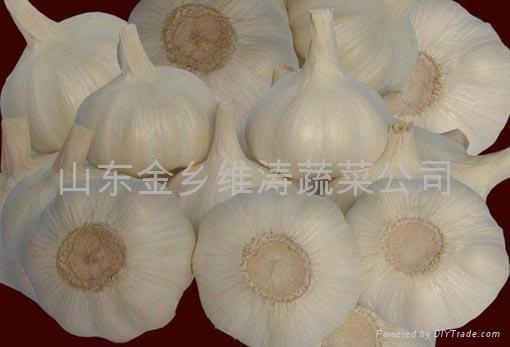 GARLIC HEIGHT QUALITY OF EXPORT 1