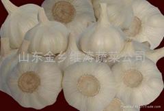出口大蒜优质原料
