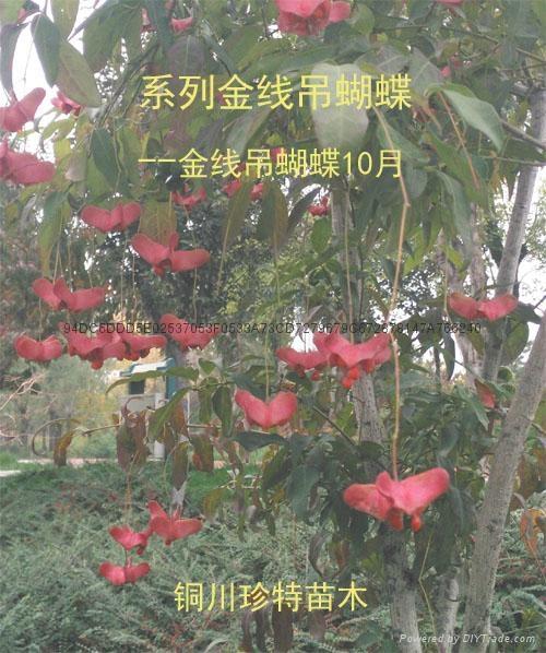 風動蝴蝶樂逍遙 1