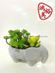 多肉植物花盆容器